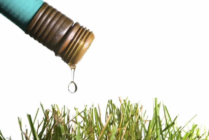 Garden hose and grass - large